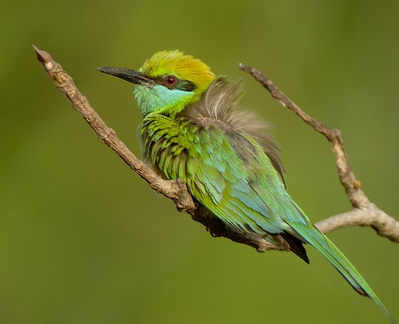 Show  details for Birdwatching - Colours of Sri Lanka