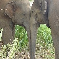 Family holiday, Elephants