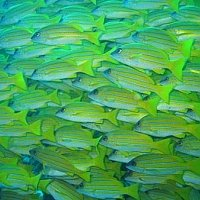 School-of-tropical-fish